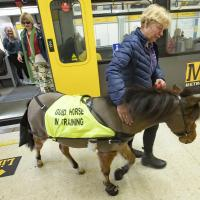 Digby the guide horse at a Metro station